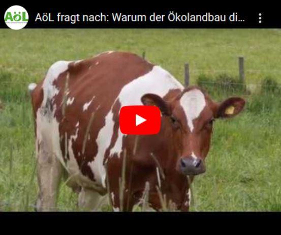 Aoel video 3